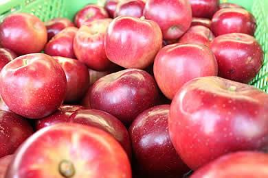 リンゴ狩り02