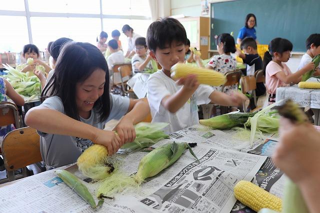 トウモロコシの皮むき体験(3)
