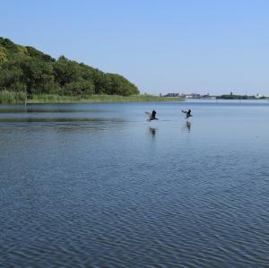 G牛久沼の自然