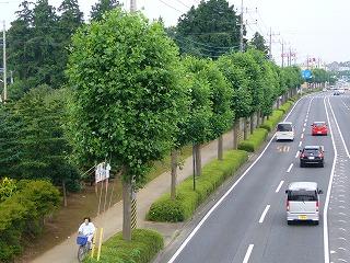 http://www.city.ushiku.lg.jp/data/img/29-1350458964_72.jpg